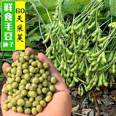 江苏省宿迁市沭阳县黄豆种子
