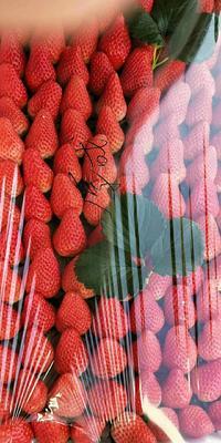 河北省秦皇岛市昌黎县美国甜查理草莓 20克以上