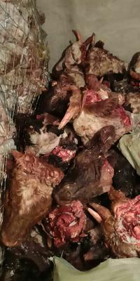 内蒙古自治区兴安盟乌兰浩特市生牛头 生肉