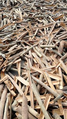 广西壮族自治区钦州市钦南区桂皮树