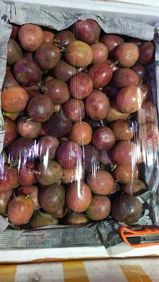 广东省广州市白云区紫红色百香果 80 - 90克