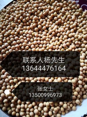 吉林省吉林市昌邑区芽豆690 生大豆 1等品