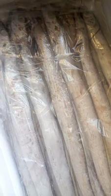 山东省威海市环翠区东海带鱼 野生 0.5公斤以下