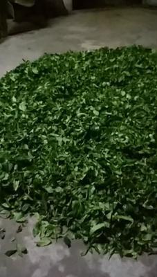广东省潮州市饶平县老藏茶 散装 一级