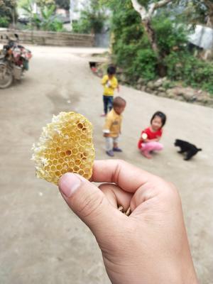广西壮族自治区玉林市博白县蜂蜜酵素 塑料瓶装 100% 2年以上