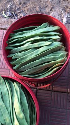 山东省潍坊市寿光市扁青芸豆 1cm以上 20cm以上