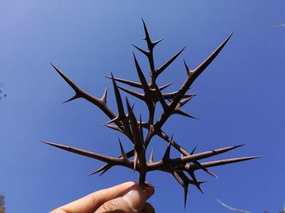 湖北省随州市广水市皂角树