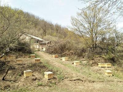 甘肃省天水市清水县土蜂蜜 塑料瓶装 100% 2年以上