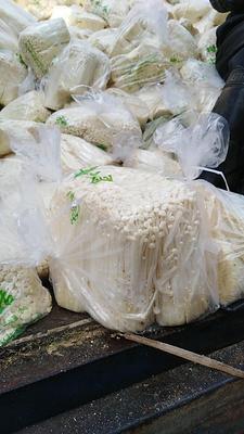 江苏省徐州市铜山区白金针菇 鲜金针菇 8~10cm 0.5~1.2cm