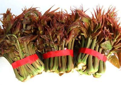 四川省绵阳市江油市红油香椿芽 露天种植 箱装 一级