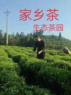 青海省西宁市城东区云南滇红 罐装 特级