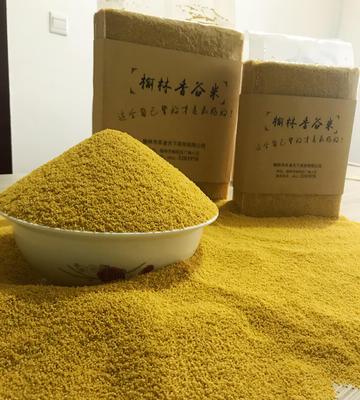 陕西省榆林市榆阳区香谷小米