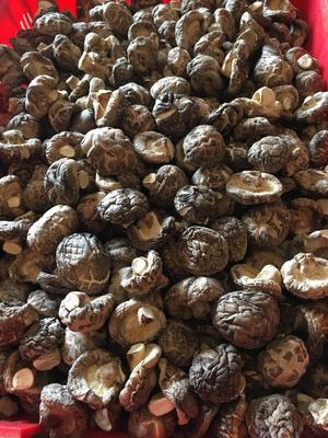 湖北省随州市随县剪柄香菇 散装 1年以上