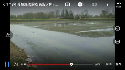 安徽省合肥市肥西县伊乐藻