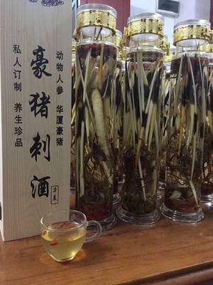 江西省抚州市南丰县中华豪猪 20-30斤