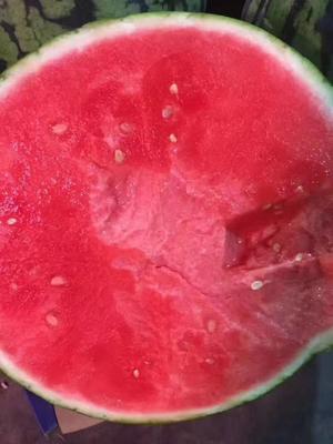 这是一张关于8424西瓜 无籽 1茬 9成熟 5斤打底的产品图片