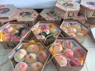 江苏省无锡市惠山区水蜜桃 60mm以上 4两以上