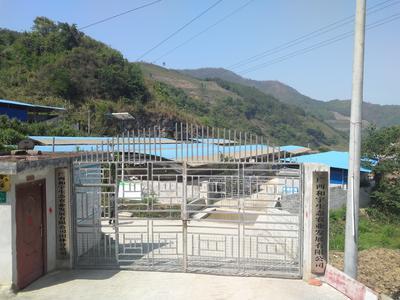 广西壮族自治区百色市右江区生态野猪 100斤以上 统货