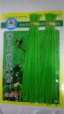 河南省周口市鹿邑县豆角种子 ≥97%
