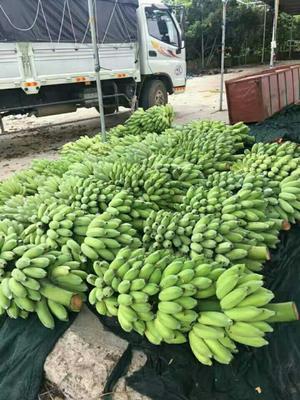 云南省文山壮族苗族自治州西畴县西贡蕉 七成熟 40斤以下