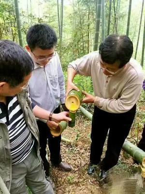 福建省三明市宁化县竹筒酒 纸盒装 3-6个月