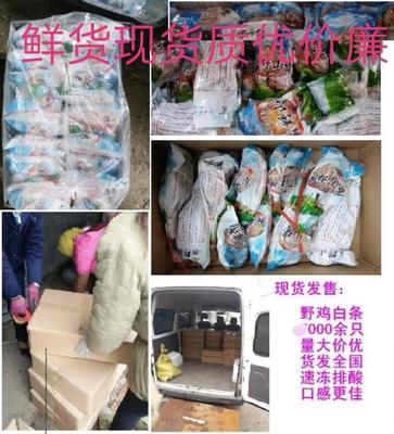 山东省济宁市泗水县七彩山鸡 1-2斤