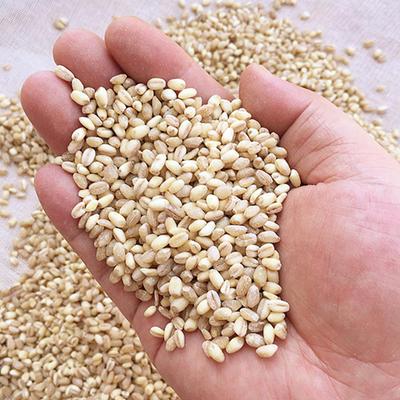 山东省滨州市滨城区混合小麦