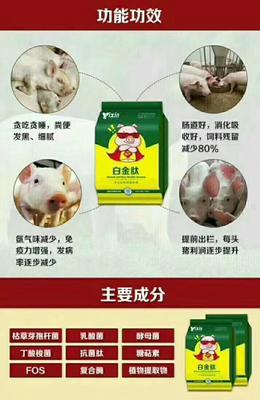 河南省郑州市金水区长白猪 60斤以上