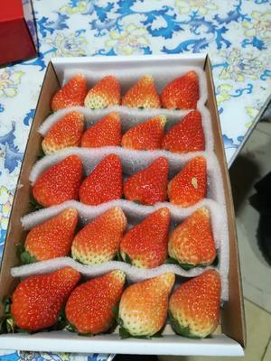 辽宁省丹东市东港市双流冬草莓 20克以上