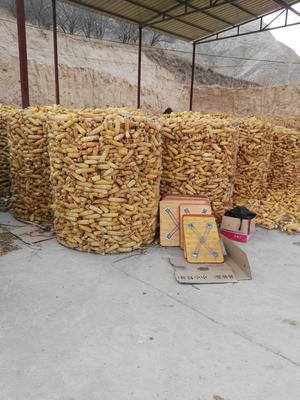 山西省大同市浑源县混合玉米粒 霉变≤1% 净货