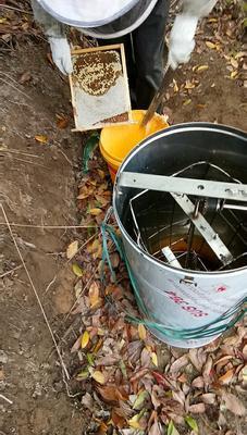 广东省茂名市高州市蜂蜜膏 24个月以上