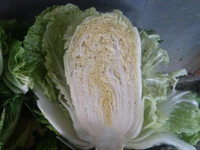 山东省青岛市平度市黄心大白菜 6~10斤 净菜