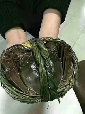 江苏省南京市高淳区固城湖大闸蟹 2.0-2.5两 母蟹