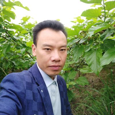 湖南省怀化市靖州苗族侗族自治县大叶桑 3 - 4cm