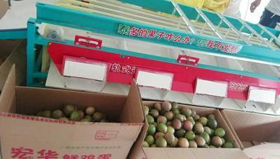 河北省沧州市新华区果蔬分选机