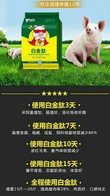 河南省郑州市金水区内三元 60斤以上