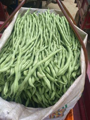 云南省红河哈尼族彝族自治州弥勒市无筋四季豆 15cm以上