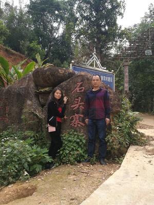 云南省西双版纳傣族自治州勐海县普洱生态茶 散装 一级