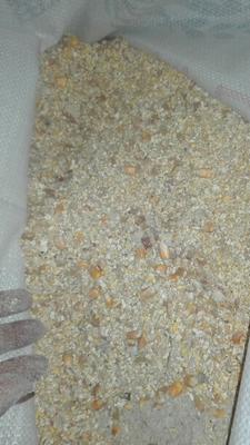 广西壮族自治区钦州市钦南区玉米干粮 霉变≤1% 净货