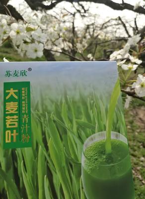 江苏省徐州市丰县青汁 纸盒装 18-24个月