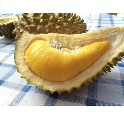广东省广州市白云区马来西亚榴莲 80 - 90%以上 2 - 3公斤