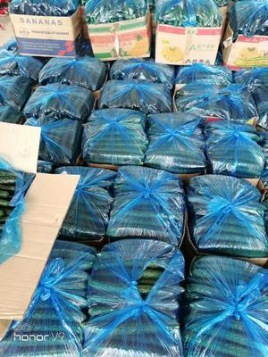 河南省安阳市滑县密刺黄瓜 25~30cm 鲜花带刺