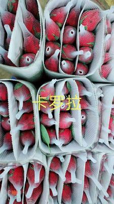 云南省昆明市呈贡区四季玫瑰