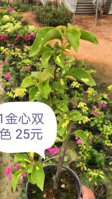 福建省漳州市芗城区怡锦 0.2~0.5米