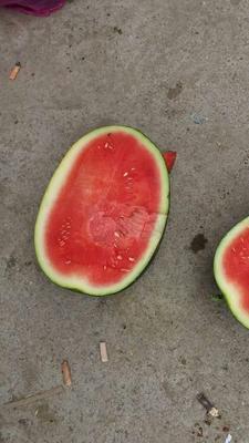 广东省阳江市阳西县黑美人西瓜 有籽 1茬 8成熟 8斤打底