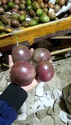 广西壮族自治区崇左市凭祥市紫香一号百香果 90 - 100克