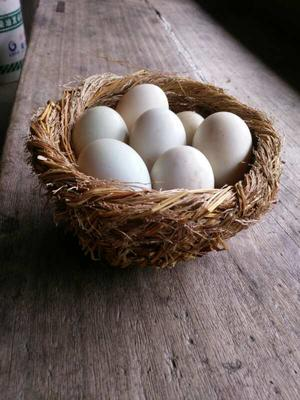 贵州省黔东南苗族侗族自治州从江县土鸡蛋 食用 箱装