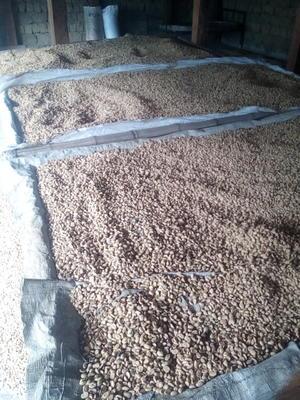 云南省保山市隆阳区保山赧亢咖啡生豆