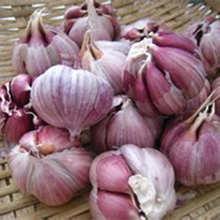 大蒜种子 95%以上