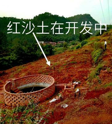 四川省自贡市荣县大五星枇杷 0.4 - 0.7两